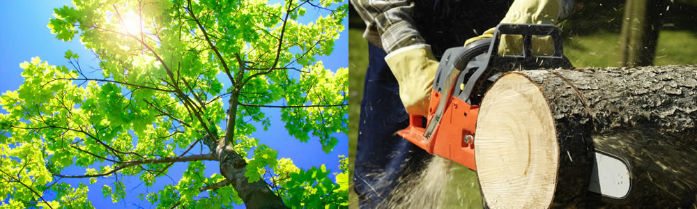 Tree Services Wakefield